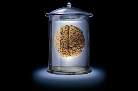 cropped-albert-einsteins-brain-wallpaper_7066.jpg