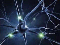sinapses_imagem_da_ciencia_hoje